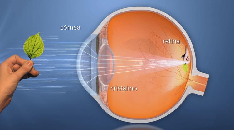 vision cornea cristalino retina ¿Cómo funcionan nuestros ojos?